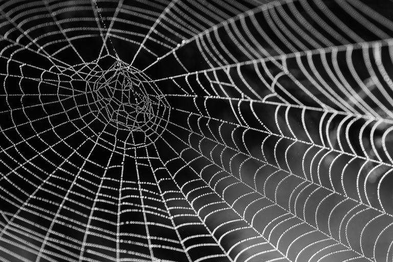 Web crawlers: Back to the basics on how they work